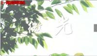 视频泰康人寿温暖短视频微光.rar