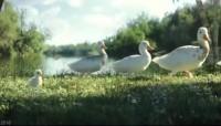激励视频梦想励志小鸭子.rar